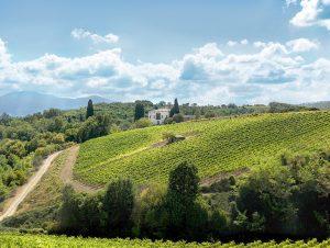 ruffino-vineyards