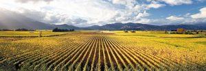 whitehaven-vineyard