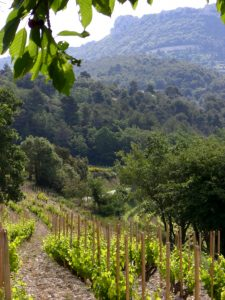 cosme-vineyards-near-gigondas-hill